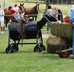 Barrel Pony