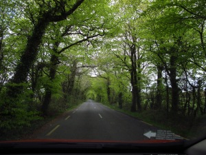 One of my first roads in Ireland - how cool are the trees meeting over the road