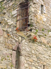 Flowers on Fethard Castle