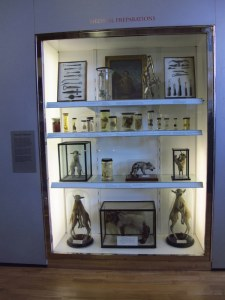 Specimen jars at the Hunterian, Glasgow