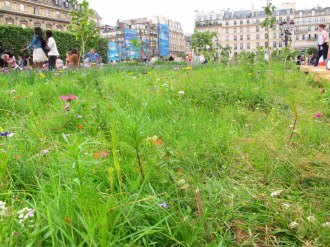 Wildflowers in the middle of Paris