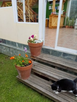 The hosteria had lovely gardens and flowers and also a cute cat