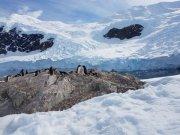 More penguin activity