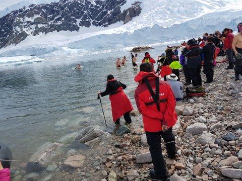 Polar plungers at Neko Harbour