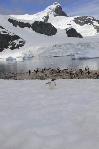 1st day penguins