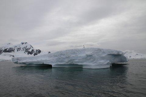 Not a shag on a rock, a shag on an iceberg!
